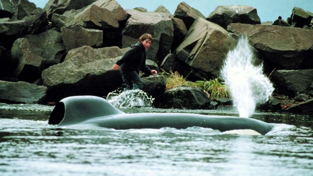 how to watch free willy